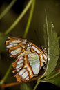 Tropical Butterfly Royalty Free Stock Photos - 13054868