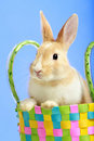 Easter Bunny In A Basket Stock Photo - 13055430