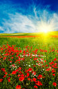Wonderful Sunset Above Green Meadow. Stock Photography - 13062632