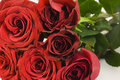 Bunch Of Red Roses Royalty Free Stock Photo - 13070495