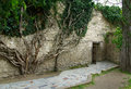Ivy Vines Stock Images - 13084364