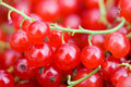 Ripe Red Currant Royalty Free Stock Photos - 13102798