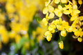 Yellow Flowers Royalty Free Stock Image - 13108636