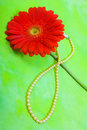 Red Gerbera And Pearl Stock Photography - 13113802