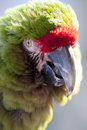 Parrot Royalty Free Stock Images - 13164929