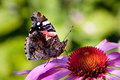 Red Admiral Stock Photo - 13173330