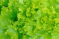 Green Salad Royalty Free Stock Images - 13198689