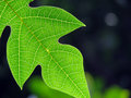Leaf Stock Photo - 1320550