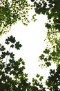 Green Leaves Frame Royalty Free Stock Images - 1327919