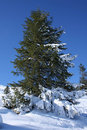 Beautiful Green Fir-tree In To Snow Stock Images - 13219574