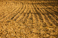 Stubble Field Background Stock Images - 13251024
