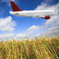 Airplane And Wheat Field Royalty Free Stock Images - 13307139