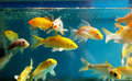 Aquarium Royalty Free Stock Image - 13326496