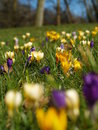 Spring Flowers In Holland Stock Image - 13351351