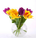 Colorful Tulips Royalty Free Stock Images - 13357029