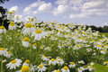 Flower Meadow Stock Photography - 13377112