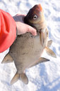 Really Big Bream In Fisherman S Hand Royalty Free Stock Image - 13382446