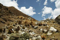 Andes In The Peru Royalty Free Stock Photography - 1345997