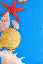Shells And Starfish On Blue Royalty Free Stock Images - 13446919