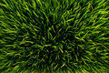 Green Grass Royalty Free Stock Image - 13459006