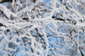 Hoar Frost Royalty Free Stock Image - 13471936