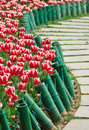 Tulip And Path Royalty Free Stock Photos - 13507188