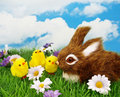 Easter Card Royalty Free Stock Photography - 13542537