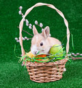 Easter Nest Royalty Free Stock Photo - 13556285