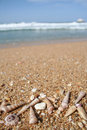 Sea Shells At The Beach With Copy Space Stock Photography - 1363492