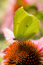 Butterfly Royalty Free Stock Photo - 1365385