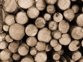 Cut Timber Royalty Free Stock Images - 1367249