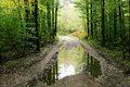 Forest Road With Puddle Stock Images - 13602964