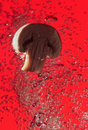 Field Mushroom In Water On Red Stock Images - 13625914