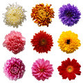 Flowers Royalty Free Stock Images - 13695399