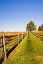 Grassy Lane On A Fall Afternoon Royalty Free Stock Photos - 1376348