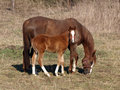 Horse With Foal Stock Photos - 13719683