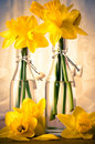 Spring Daffodils Royalty Free Stock Photography - 13730587