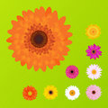 Colorful Daisies. Vector Stock Images - 13756274