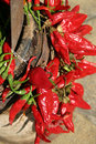 Red Chilly Peppers Stock Photography - 13824442