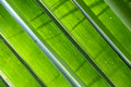Coconut Leafs Royalty Free Stock Image - 13835466