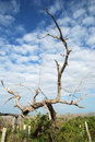Dry Branches Royalty Free Stock Photography - 13868787