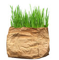 Green Grass In The Old Pack Stock Photo - 13871560
