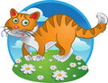 Orange Fun Cat On Color Background Royalty Free Stock Photos - 13875688