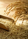 Rice Grain Stock Images - 13883674