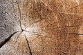 Cut Of An Old Tree. Close Up Stock Photo - 13921450