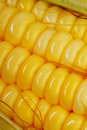 Golden Corn Stock Images - 13953954