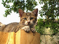 Portrait Of The Cat Royalty Free Stock Photos - 13983868