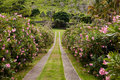 Row Of Oleander Flowers Stock Photography - 13990172