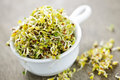 Alfalfa Sprouts In A Cup Royalty Free Stock Photography - 13993337