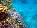 Coral Reef And Fish Royalty Free Stock Images - 13999999